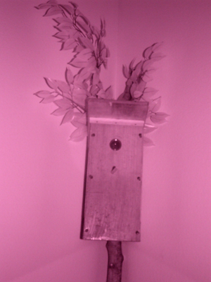 Infrared photo of birdhouse spycam