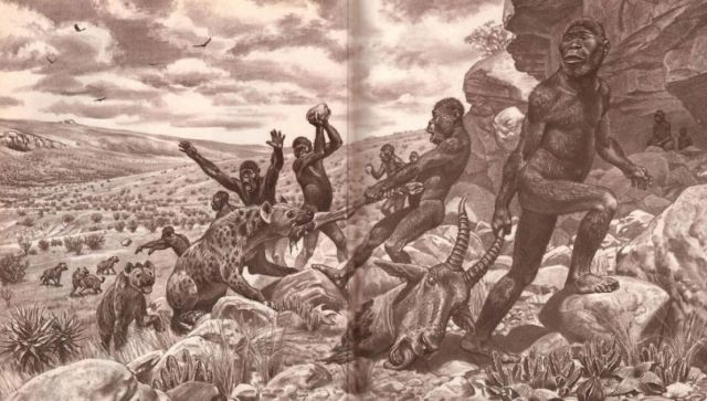 Illustration Of Early Hominids Fighting A Pack Of Hyenas