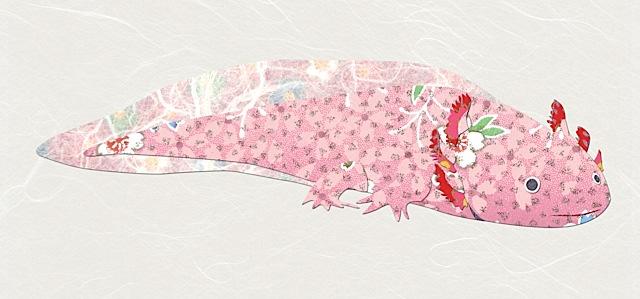 H01Axolotl.jpg