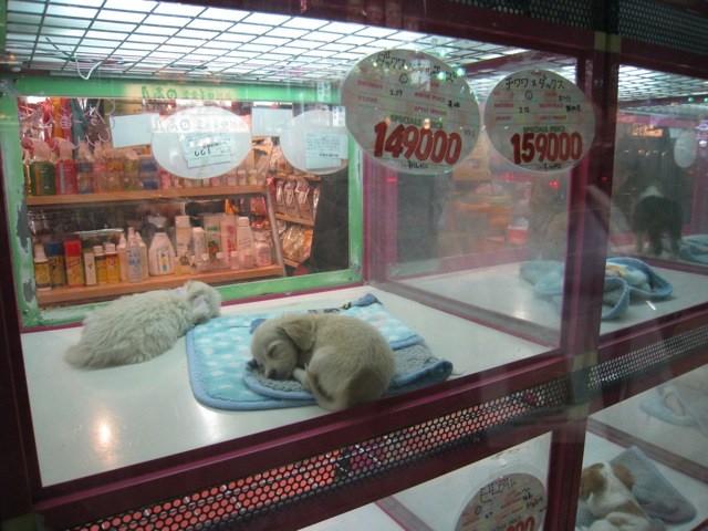 Pet Barn Dog Bed Xl
