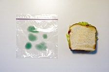 _independent_work_images_moldy_bag_1.jpg