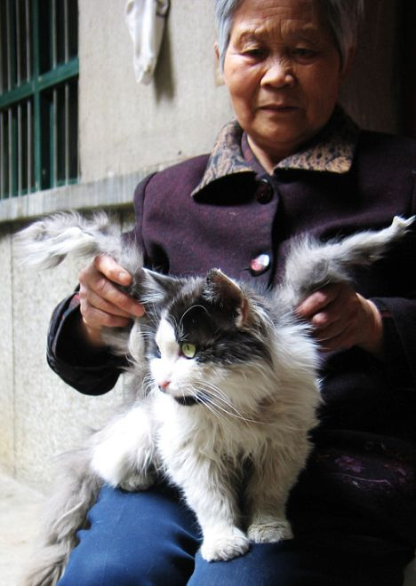 Winged cats discovered in western China – Boing Boing