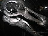 dodo-bird3.jpg