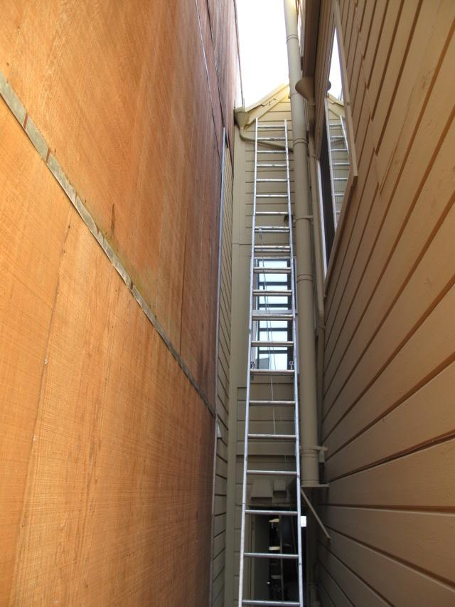 pigeon ladder.JPG