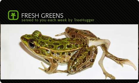 treehuggertreefrog.jpg