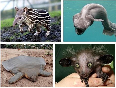 Weird -Animals
