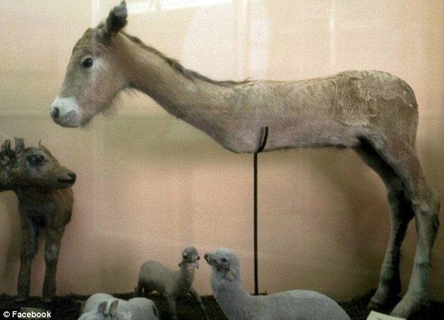 A two-legged donkey taken from the Facebook page 'badly stuffed animals'.jpeg