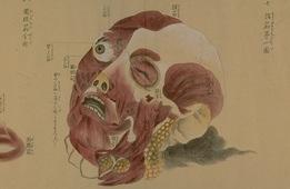 SkullznEyez Loves Cadavers