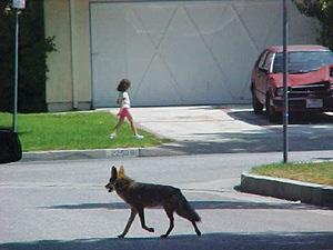 Cougar hunting in florida - 3 1