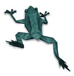 Frog Experts At Florida Museum Of Natural History