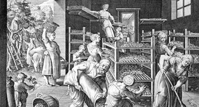 Silkworm farming – Boing Boing
