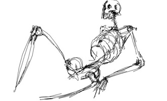 Wordpress Wp-Content Images Skeletondrawing