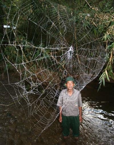 Wpf Media-Live Photos 000 261 Cache Huge-Spider-Webs-Kid 26176 600X450