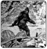 http://www.boingboing.net/images/bigfoot.jpg