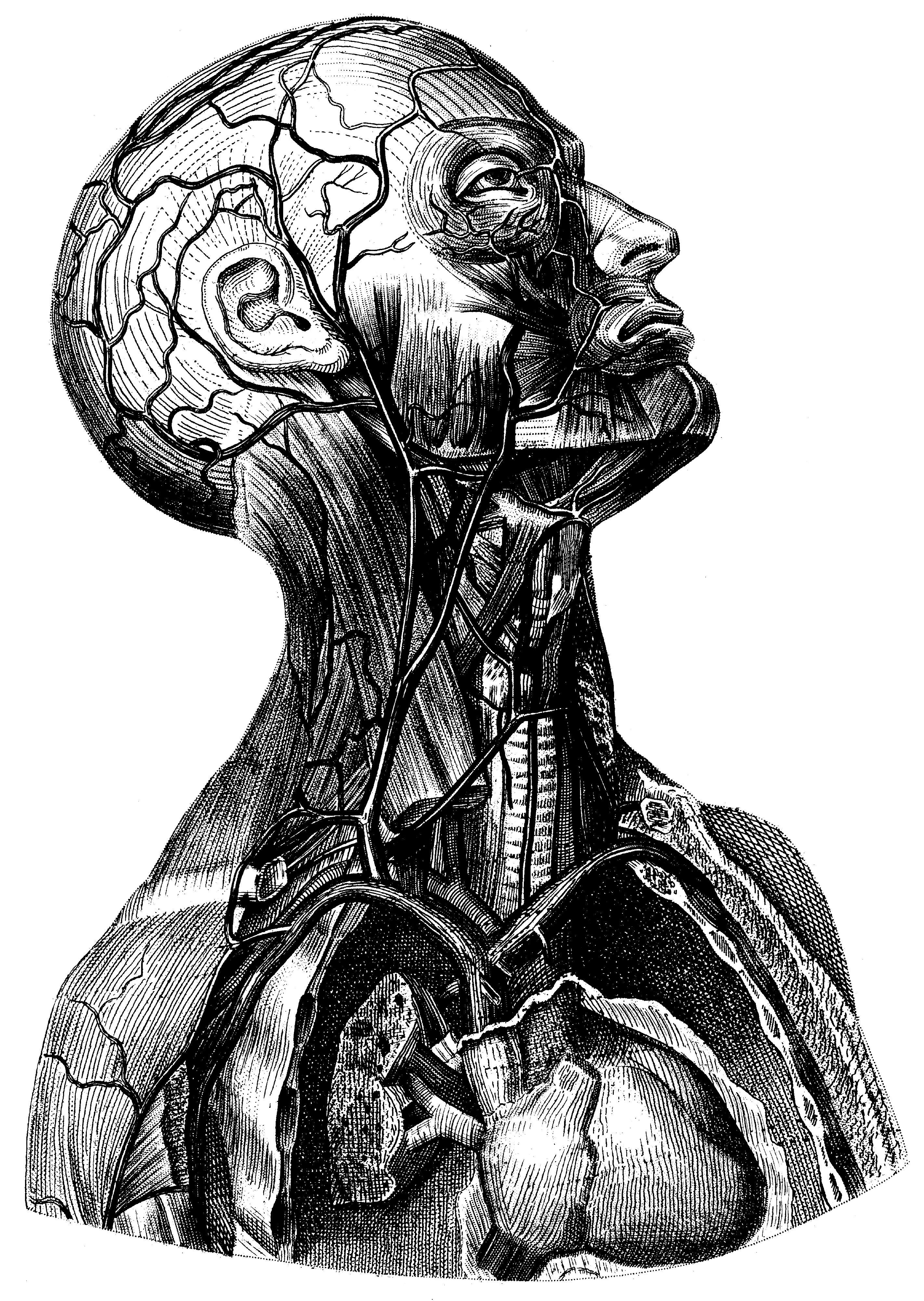 Medical curiosity clip-art - Boing Boing