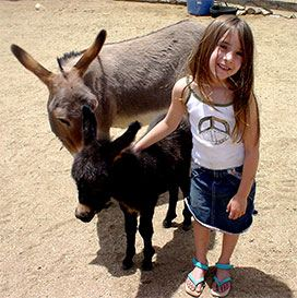 Sarina and Donkeys