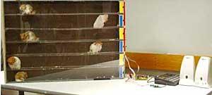 http://www.boingboing.net/images/hamstermidi.jpg