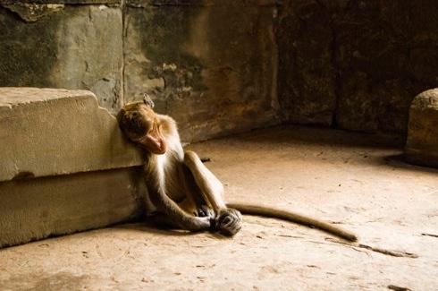 Monkeyphotototo