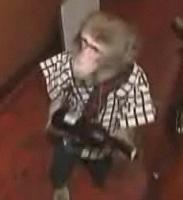 Monkey Waiter