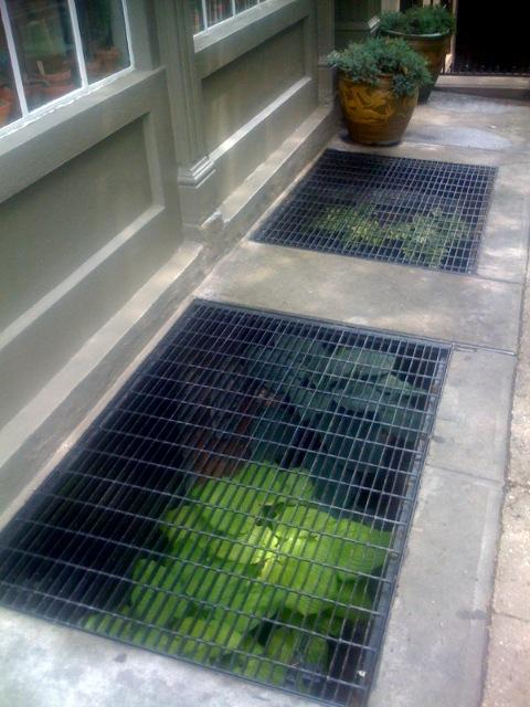 Urban Garden Below Sidewalk Grates