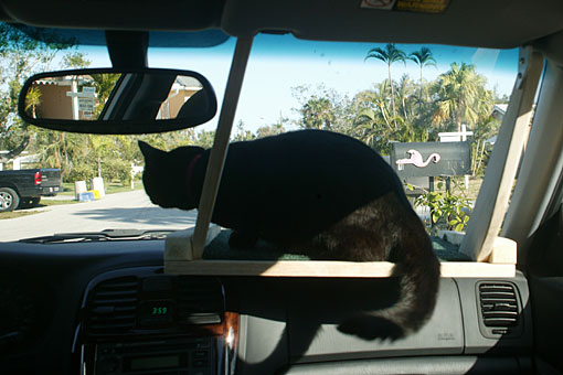 Cat on a shelf in a car