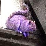 Purplesquirrrelll