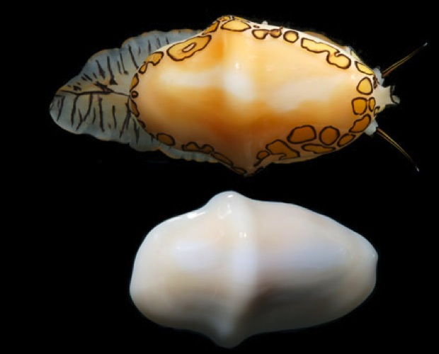 Shelleelelel
