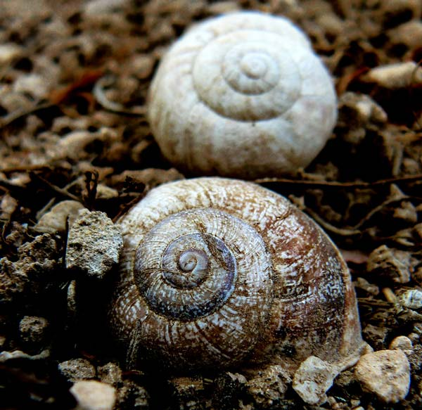 snails2010.jpg