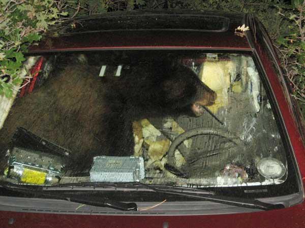 Bear Driving Car Game