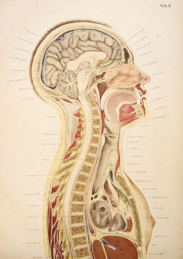 Victorian Anatomy Illustrations