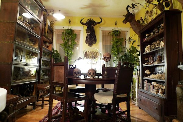 Oddities' Ryan Cohn's apartment - Boing Boing
