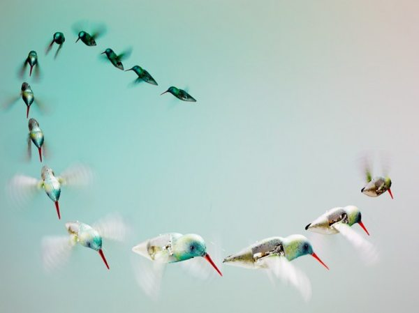 2011 11 Hummingbird-Flight-Sequence