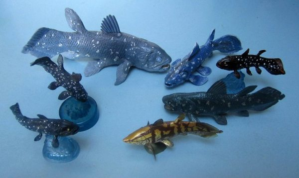 Wp-Content Uploads Coelacanths-6