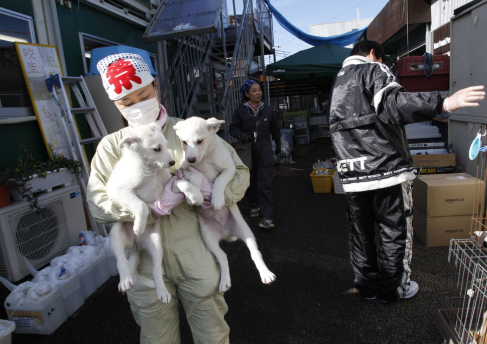 After nuclear disaster, a harsh winter for Fukushima's ...