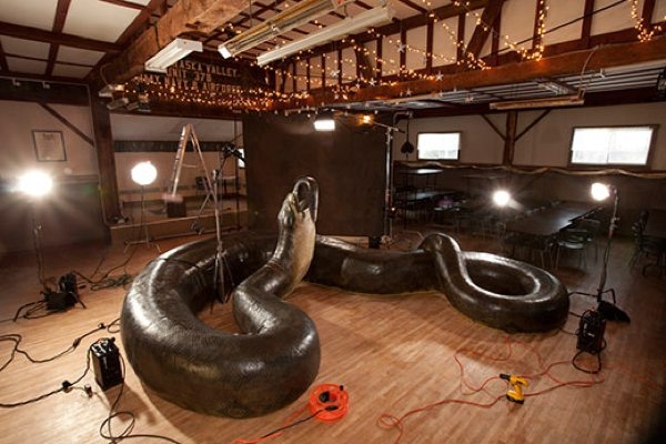the fossilized remains of the world s largest snake a 42 foot long
