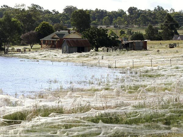 Wpf Media-Live Photos 000 497 Overrides Spider-Webs-Australia-Floods-Field 49728 600X450