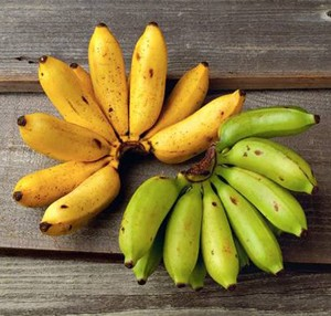 how to look after banana trees
