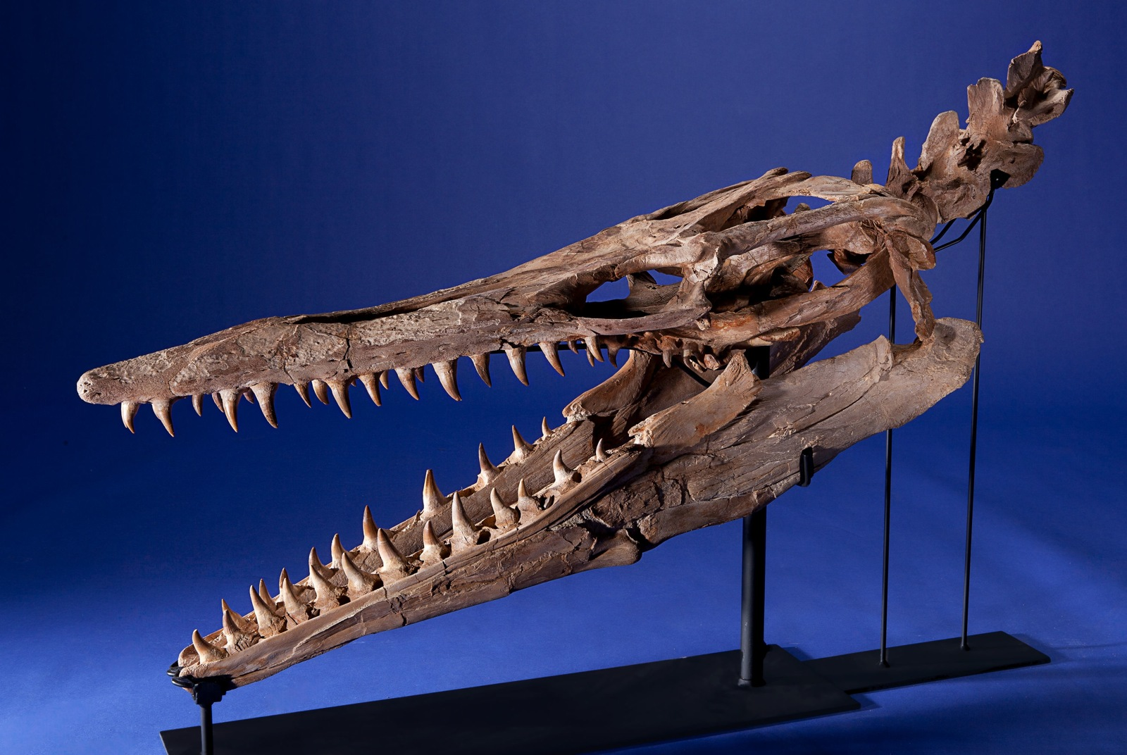Natural History Auction