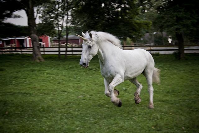SHARE TWEET STUMBLE COMMENTSReal Life Unicorn Found