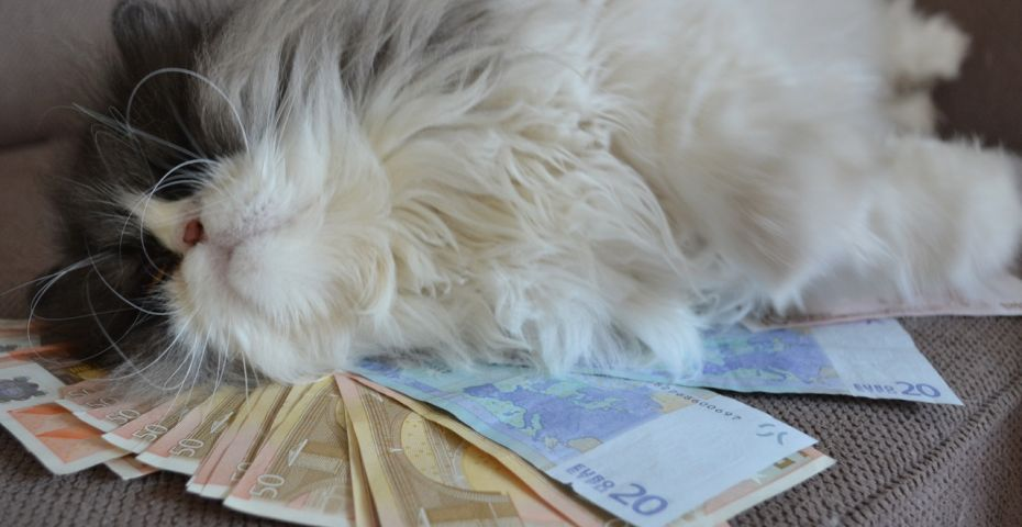 cashcats2