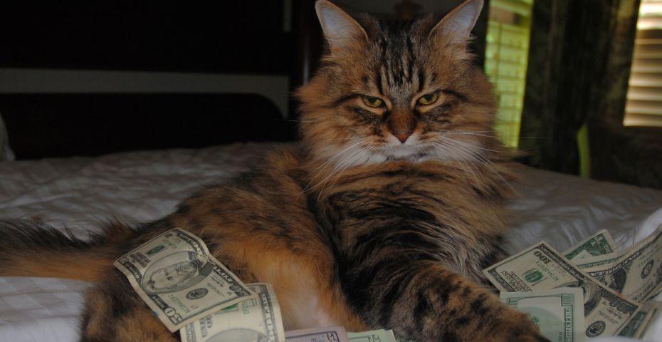 cashcats4