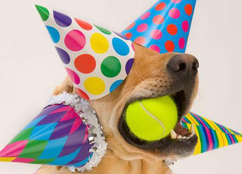 Youtube Birthday Dog Slaps Cake