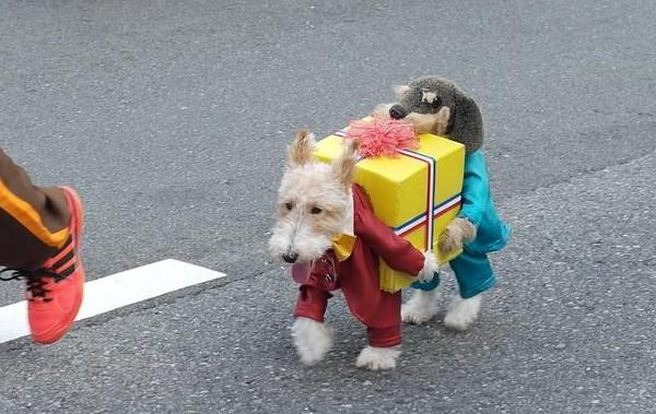 Dog Carrying Dog Food