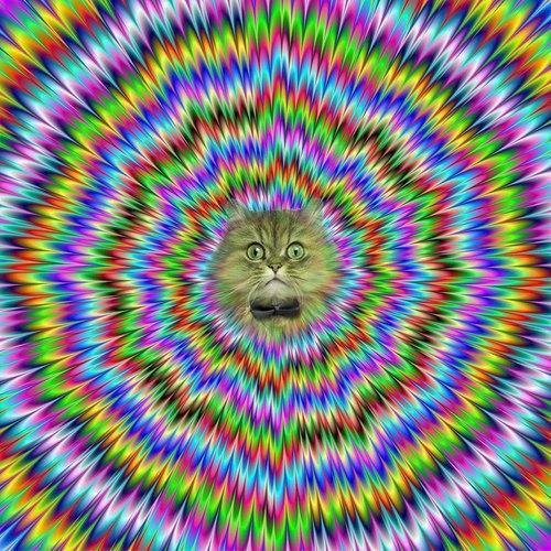 IMAGE(http://boingboing.net/wp-content/uploads/2013/01/312345_143684242453080_525111742_n.jpg)