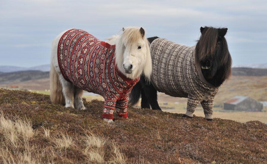 [Image: shetland-ponies-cardigans4.jpg]