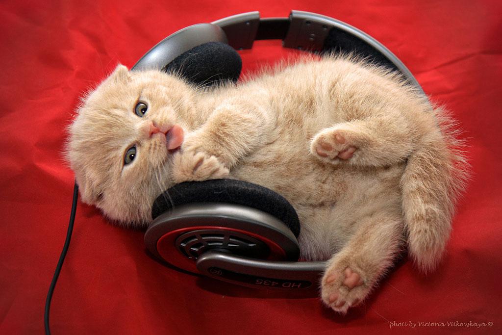 Caturday: headphones kitten / Boing Boing
