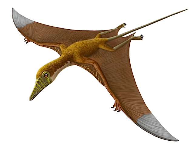 Pterosaurs: Winged, aw...