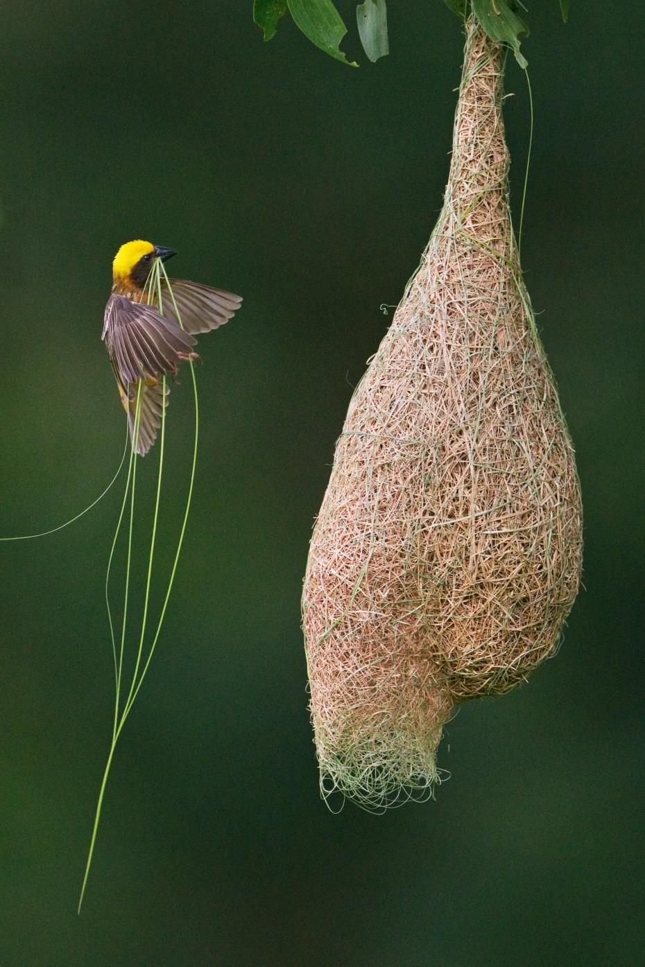 Nature S Nest Holidays Yelagiri Review