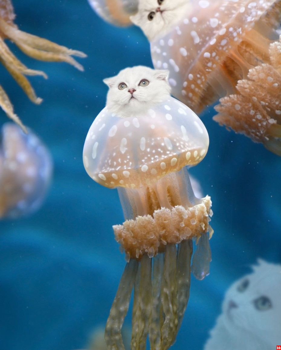kittehfish