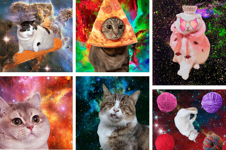 omgcats